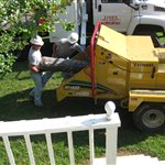 Tree Cutting Services