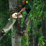 Mccutchen Tree Service Logo