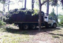 Abc Tree & Stump Removal Service Logo