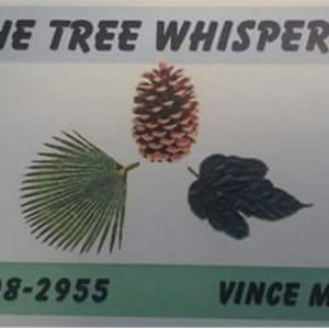 Tree Whisperer Cover Photo