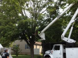 Affordable Landscape And Tree Service Logo