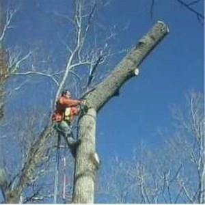 Hammersmith Tree Service Cover Photo