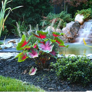 Green Servpro Landscape Maintenence Cover Photo