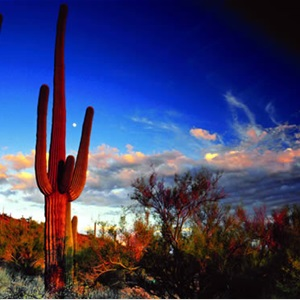 Southern Arizona Landscaping, llc. Cover Photo