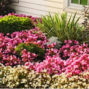 Dsd Landscaping and Cleaning Company Cover Photo
