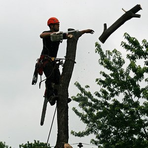 Xtreme Climbing Tree Service Cover Photo