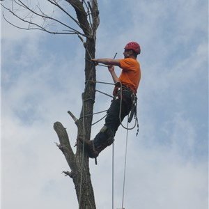 Arbor View Tree Care Services Logo