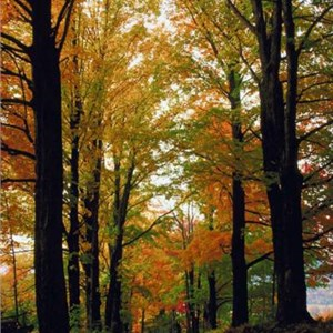 Christiansen Tree Service, Inc. Cover Photo