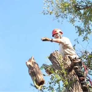 One Life Tree Service Cover Photo