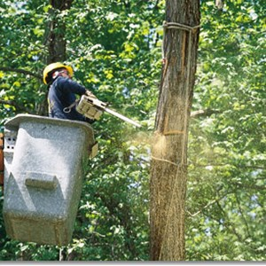 Absolute Tree Care Cover Photo