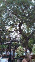 Solid Oak Tree Management Logo