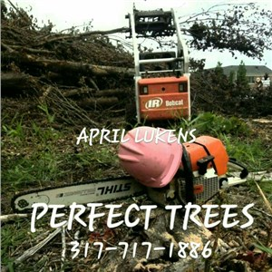 Perfect Trees Logo