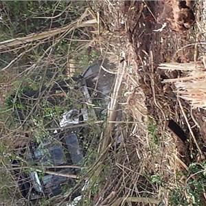 Tree Removal Price