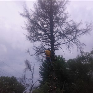H & C Tree Service & Handyman Cover Photo
