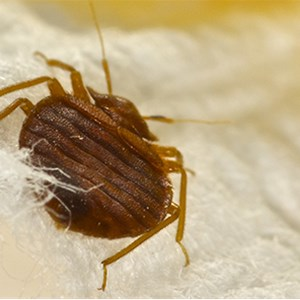 Bed Bug Exterminating Logo