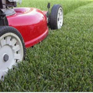Grass Cutting Business