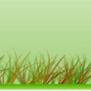 Trimmers Lawn Service, LLC Logo