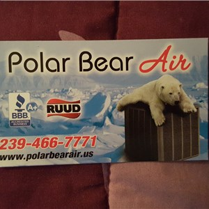 Polar bear air Cover Photo