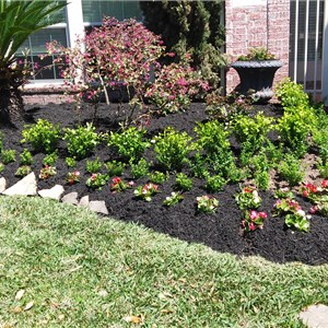 Backyard Landscaping on a Budget