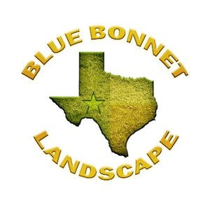 Blue Bonnet Landscape Cover Photo