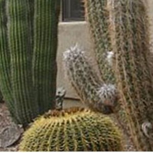 Arctic Cactus LLC Cover Photo