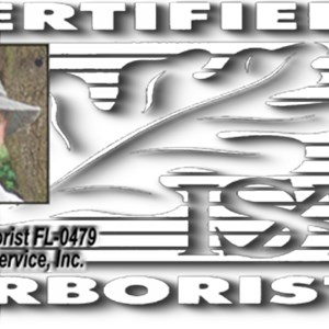 The Palms Tree Service, Inc. Logo