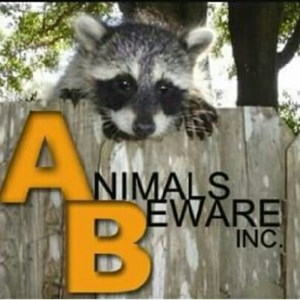Animals Beware Inc Cover Photo