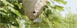 Connors Pest & Termite Control Inc Logo