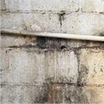 Mold Abatement Contractors, Inc Cover Photo