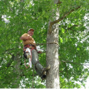 George West Tree Service Cover Photo