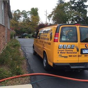 Bear Carpet Cleaning & Water Restoration Logo