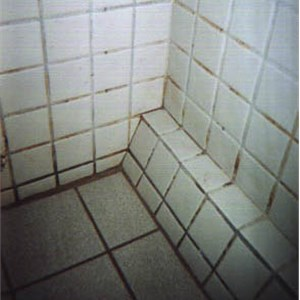 Great Grout Tile Care Cover Photo