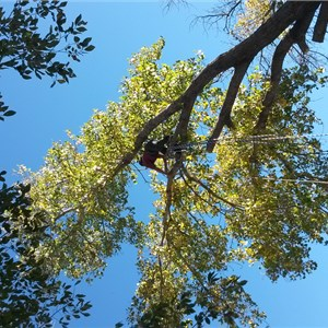 Arborcare Tree and Landscaping Cover Photo