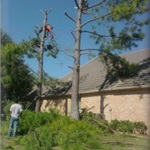 Martinez Tree Service Cover Photo