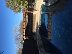 Swimming Pool Repair Service Logo