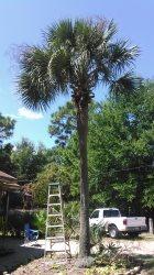 David Bryants Tree, Lawn and Handyman Services Logo