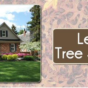 Lexington Tree Service Inc Logo