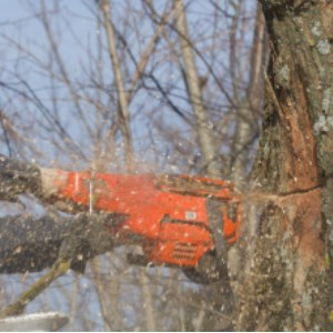 Gonzales Tree Service Cover Photo