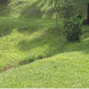 Local Lawn Care