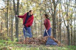 J & A Rubio Landscaping & Maintenance Logo