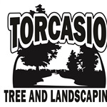 Torcasio Tree & Landscaping Cover Photo