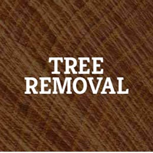 Inexpensive Tree Care Cover Photo