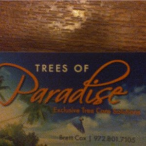 Trees Of Paradise Cover Photo