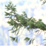 Sequoia Tree Service Cover Photo
