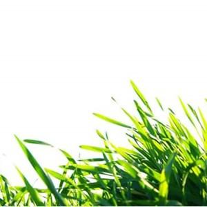 Coastal Cuts Lawn & Landscaping Services Logo