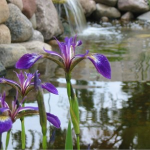 Water Garden Landscaping Cover Photo