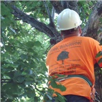 Tree Solutions Cover Photo
