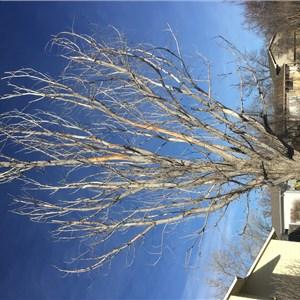 Pauls Tree Service Cover Photo