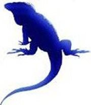 Blue Iguane Design Logo