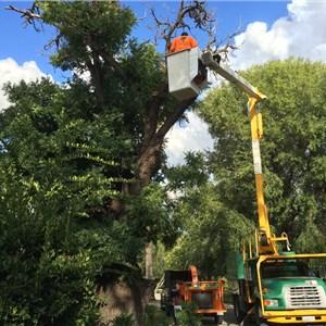 How To Kill Tree Stump